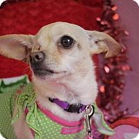 Adopt A Pet :: Ida - San Antonio, TX