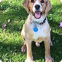Adopt A Pet :: Marley - Sacramento, CA