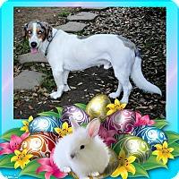 Adopt A Pet :: Gazzy - Crowley, LA