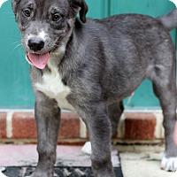 Adopt A Pet :: Nickles - Waldorf, MD