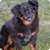 Adopt A Pet :: Snuggles - Conesus, NY