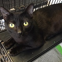 Adopt A Pet :: Levi ** New Pics ** - Trexlertown, PA