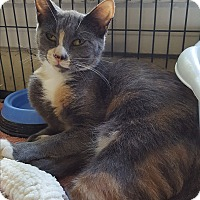 Adopt A Pet :: Sabrina - Middletown, NY