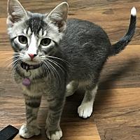 Adopt A Pet :: Ella - East Windsor, NJ