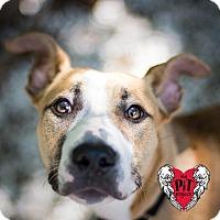 Adopt A Pet :: Mika - St. Petersburg, FL