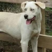 Adopt A Pet :: Beauty - Savannah, TN