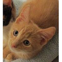 Adopt A Pet :: ELROY - Diamond Bar, CA