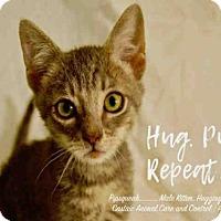 Adopt A Pet :: A5079391 - Castaic, CA