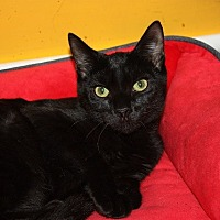 Adopt A Pet :: Whinny (LE) - Little Falls, NJ