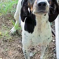 Adopt A Pet :: Oh Darlene! - Dallas, TX
