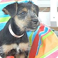 Adopt A Pet :: Chloe - Crystal River, FL