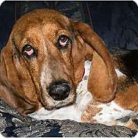 Adopt A Pet :: Lollie - Phoenix, AZ
