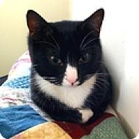 Adopt A Pet :: Morris - Vancouver, BC