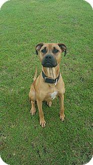 Boxer Mix Dog for adoption in Havelock, North Carolina - Lexi
