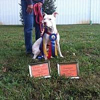 Adopt A Pet :: Jax - Troutville, VA