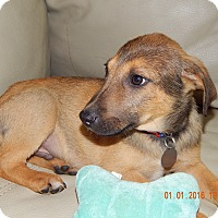 Adopt A Pet :: Luke - Homewood, AL