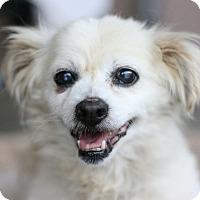 Adopt A Pet :: Wags - Canoga Park, CA
