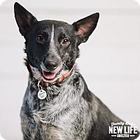 Adopt A Pet :: Sherman - Portland, OR