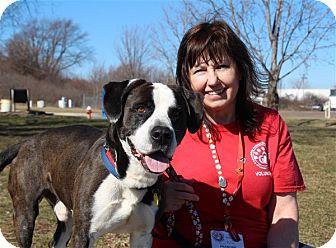 Hound (Unknown Type) Mix Dog for adoption in Elyria, Ohio - Hot Rod
