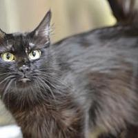 Adopt A Pet :: Millie Mom170620 - Atlanta, GA