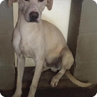 Adopt A Pet :: Beau: HALF PRICE ADOPTION! - Clarkesville, GA