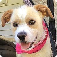Adopt A Pet :: Crecia - Frederick, MD