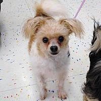 Adopt A Pet :: Ace - Lansing, MI