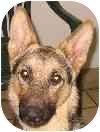 German Shepherd Dog Dog for adoption in Eatontown, New Jersey - Danny