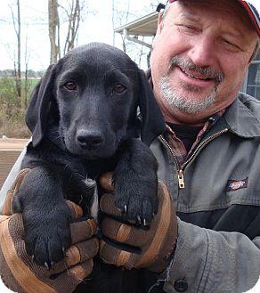 Border Collie/Dachshund Mix Dog for adoption in Sneads Ferry, North Carolina - Jake