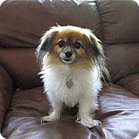 Adopt A Pet :: Georgia - San Diego County, CA