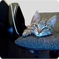 Adopt A Pet :: LT - Davis, CA