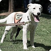 Adopt A Pet :: Nina - Cumming, GA