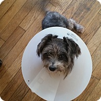 Adopt A Pet :: Hope - West Palm Beach, FL