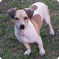 Adopt A Pet :: Matt in Houston - Houston, TX