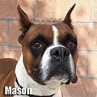 Adopt A Pet :: Mason - Encino, CA