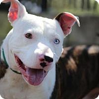 Adopt A Pet :: Bowie - Orlando, FL