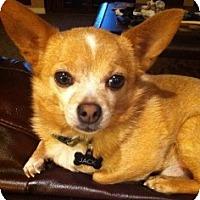 Adopt A Pet :: Jack - Mesa, AZ