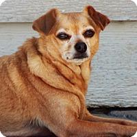Adopt A Pet :: Sadie - Grants Pass, OR