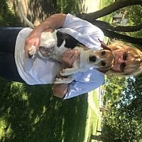 Adopt A Pet :: Hank - Cincinnati, OH