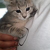 Adopt A Pet :: Princess Peach - Huntington, IN