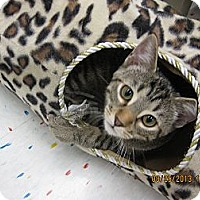 Adopt A Pet :: Tully - West Dundee, IL