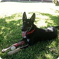Adopt A Pet :: Buster- Only $95 adoption fee! - Litchfield Park, AZ