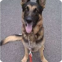 Adopt A Pet :: Max - Oceanside, CA
