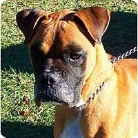 Adopt A Pet :: Hemi - Savannah, GA