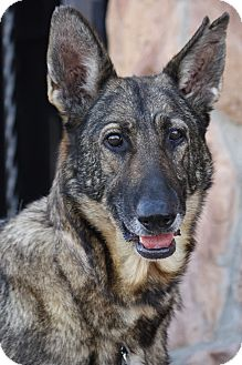 German Shepherd Dog Mix Dog for adoption in Los Angeles, California - Thelma von Thorem