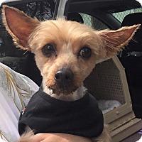 Adopt A Pet :: Sukl - Orlando, FL