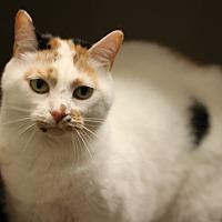 Adopt A Pet :: Skeeter - Mebane, NC