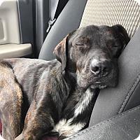 Adopt A Pet :: Samuel Jackson - Buchanan Dam, TX