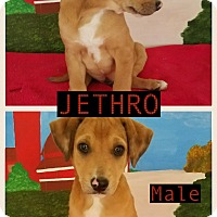 Adopt A Pet :: Jethro-pending adoption - East Hartford, CT