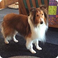 Adopt A Pet :: Teddy - Circle Pines, MN